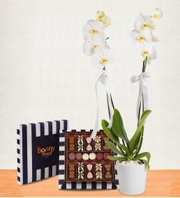 Çikolatalı Beyaz 2li Orkide