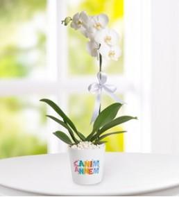 canım annem orkide