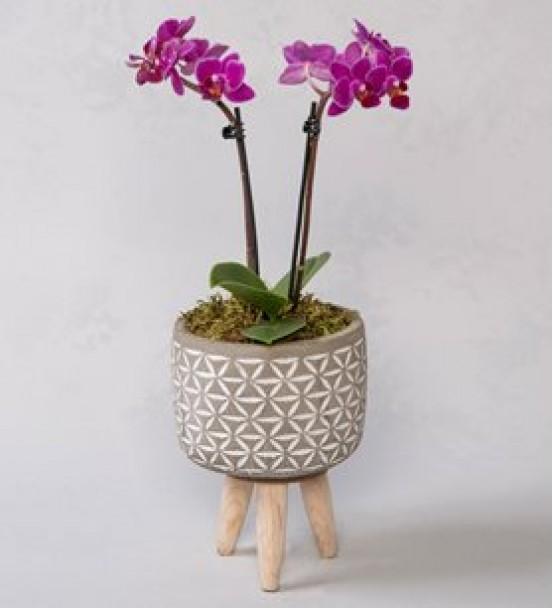 mini orkide ahşap ayaklı saksıda