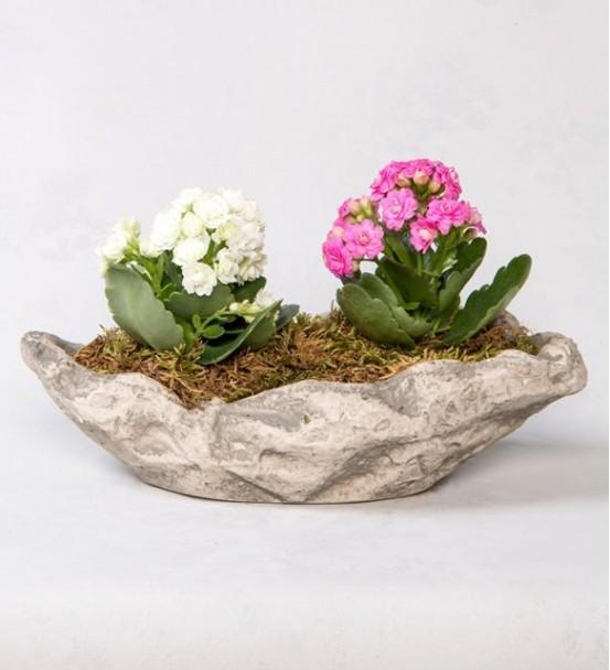 kayık saksıda pembe beyaz saksı çiçeği