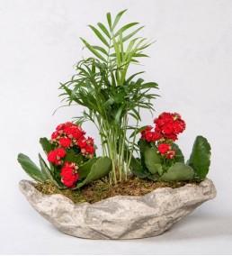dekoratif saksıda palmiye ve kalanchoe