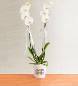 canım anneme 2 dal beyaz orkide