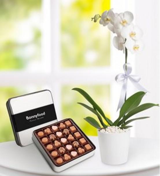 çikolatalı tek dal beyaz orkide
