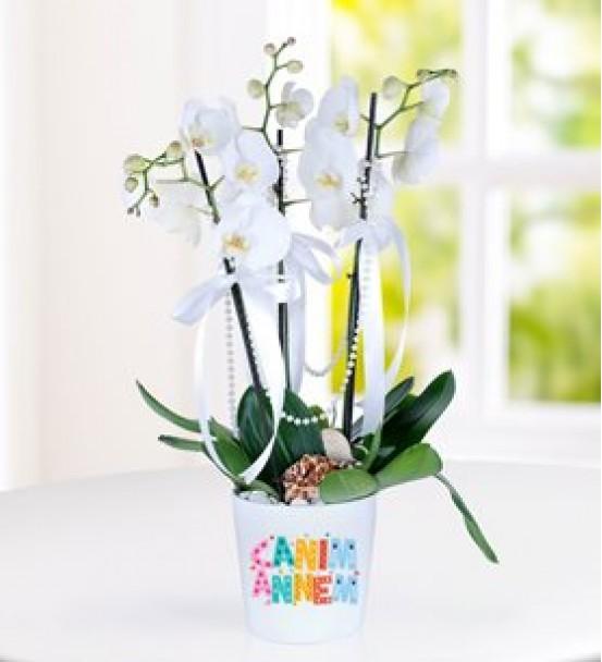 canım anneme 3 dal orkide