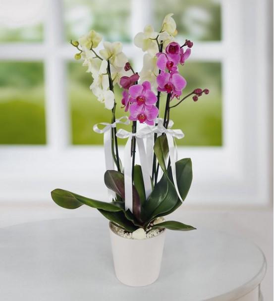 Seramik Vazoda 4 Dal Mor ve Beyaz Orkide