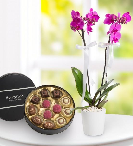 Çikolatalı 2li mor orkide