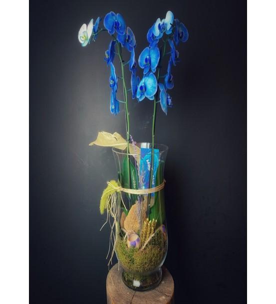 ihtişamlı mavi orkide