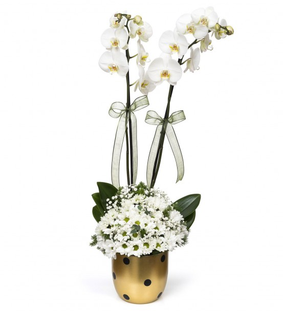 Gold Vazoda Papatya ve Beyaz 2li Orkide