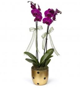 Gold Vazoda Mor 2li Orkide