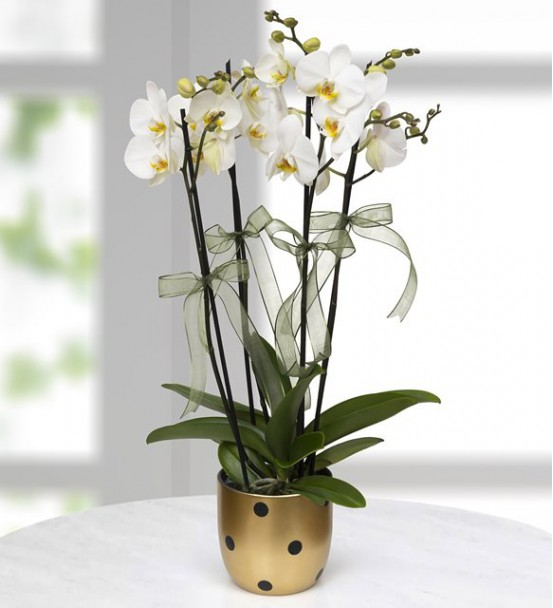 Gold Vazoda Beyaz 4 Dal Orkide