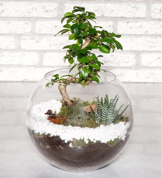 Bonsai Bahçesi Teraryum