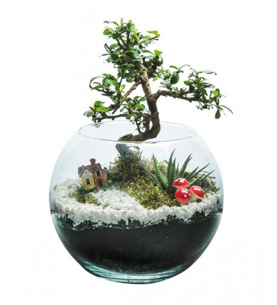 Bonsai Bahçesi Teraryum-1