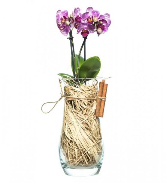Vazo İçerisinde Mini orkide